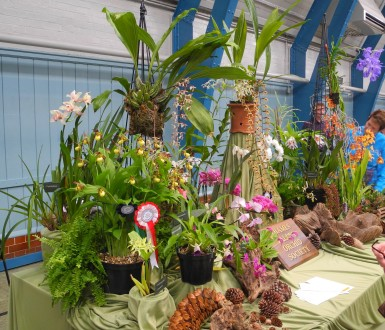 Thames Valley Orchid Society
